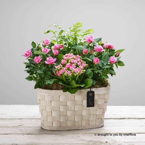 pink planted basket