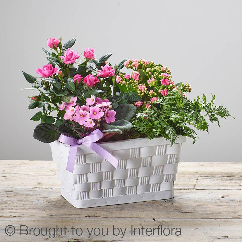 basket with houseplants