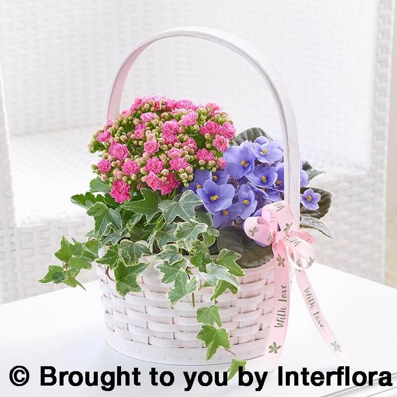 pretty basket of plants