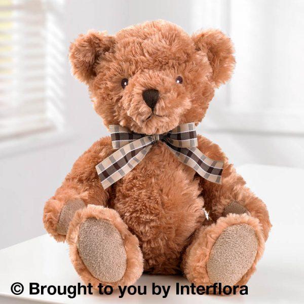 benjamin teddy bear