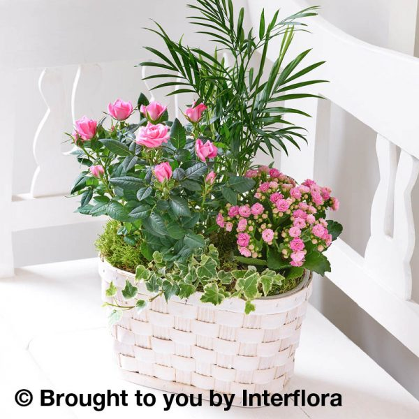 basket of flowering and foliage plants