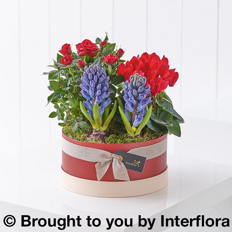 Hatbox with scented hyacinths