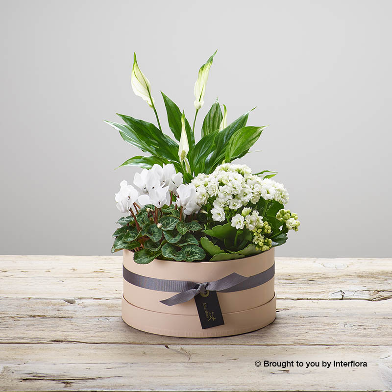 hatbox arrangement of plants