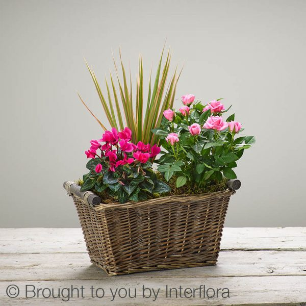 Magenta Breeze Planted Basket