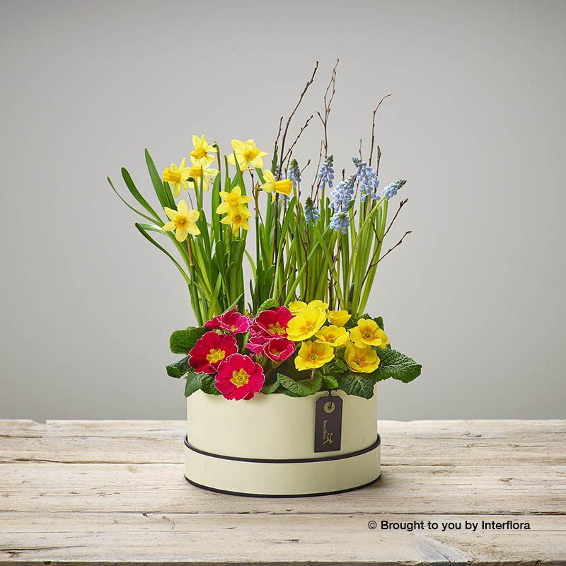 hatbox of mixed spring plants